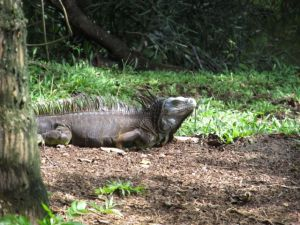 Mr. Monitor Lizard is fully aware... but is keeping it to himself
